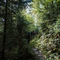 Beautiful lush forest.- Mount LeConte via Trillium Gap + Boulevard Trail