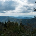 View along the Appalachian Trail on the way back.- Mount LeConte via Trillium Gap + Boulevard Trail