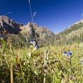 Wildflowers of the Chicago Basin near Windom Peak.- Windom Peak