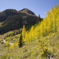 Aspen during the autumn in Cunningham Gulch.- Cunningham Gulch