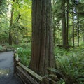 Cathedral Grove.- Cathedral Grove