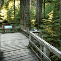 Educational signage along the trail.- Cathedral Grove