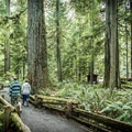 Walkers at Cathedral Grove.- Cathedral Grove