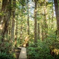 A boardwalk section on the Halfmoon Bay Trail.- Halfmoon Bay