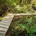 Boardwalks are common on the hiking trails in Pacific Rim National Park.- Halfmoon Bay