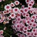 Flora detail at the Lan Su Chinese Garden.- Lan Su Chinese Garden