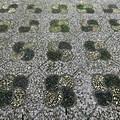 Stone path detail at the Lan Su Chinese Garden.- Lan Su Chinese Garden