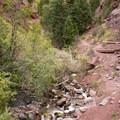 The trail to Cornet Creek Falls.- Cornet Creek Falls