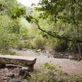 A quiet place to sit near Cornet Creek Falls.- Cornet Creek Falls