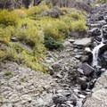 The eastern access point to the Via Ferrata is found via a brief ascent alongside Ingram Creek.- Via Ferrata, Telluride