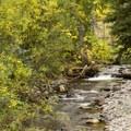 Bear Creek runs adjacent to Town Park Campground.- Town Park Campground