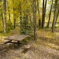 Walk-in sites at Town Park Campground.- Town Park Campground