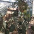 In the desert pavilion, cacti rule.- Brooklyn Botanic Garden