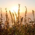 Sun lights up vegetation along the point.- Crescent Beach Overlook