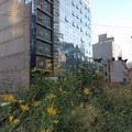 Fall flowers bloom on the High Line Trail.- The High Line