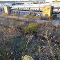 In places the original tracks are left behind to remind visitors of the trail's history.- The High Line