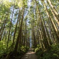 The old Willowbrae Road was once a popular route for travelling between Tofino and Uclulet.- Willowbrae Trail to Florencia Bay