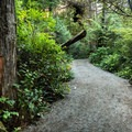 A brief forested section of the trail.- Wild Pacific Trail, Lighthouse Loop