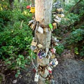 Love locks on the trail.- Wild Pacific Trail, Lighthouse Loop
