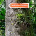 Follow the signs to the exhibition.- Finca Dracula