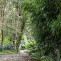 The path to the entrance.- Finca Dracula