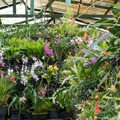 In the greenhouse.- Finca Dracula