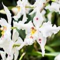 Finca Drácula hosts a wide variety of orchids.- Finca Dracula