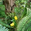 Orchids in their natural habitat.- Finca Dracula