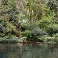 This pond is a favorite location for the elusive quetzal, which is known to visit in February and March.- Finca Dracula