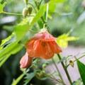 Flora in the garden.- Finca Dracula