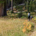 Walking along a massive meadow's edge.- Bear Basin + Seven Up Pass