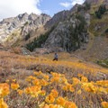 Wildflowers turning golden orange during the fall.- Bear Basin + Seven Up Pass