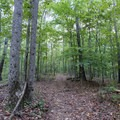 Peaceful forest in Sweetwater Creek State Park.- Sweetwater Creek State Park