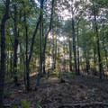 Sun poking through the trees in Sweetwater Creek State Park.- Sweetwater Creek State Park