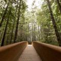Bridge leading to the Lady Bird Johnson Grove Trail.- Lady Bird Johnson Grove