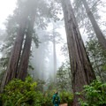 Old-growth redwoods are almost certain to make you feel small.- Lady Bird Johnson Grove