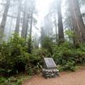 Dedication site for Redwood National Park.- Lady Bird Johnson Grove