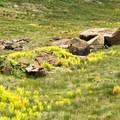 Colorful rocks and vegetation await visitors to the Tablelands.- The Tablelands