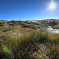 The source is a green pond in an otherwise arid desert.- Dry Suzie Hot Spring