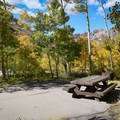 A stand of aspen trees provides seclusion and privacy from neighboring sites.- Terraces Campground + Picnic Area