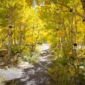 Some sites require a short walk through the aspen trees to access.- Terraces Campground + Picnic Area