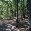 Gentle forest walking from the trailhead.- East Palisades
