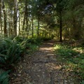 The beginning of the short trail to Thunder Rock Cove.- Thunder Rock Cove