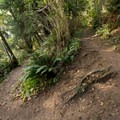 The trail has several small switchbacks.- Thunder Rock Cove