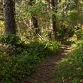 The entire trail is well forested.- Thunder Rock Cove