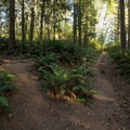 A trail also leads to Secret Beach from this trail.- Thunder Rock Cove