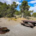 South Ruby Campground sites are surrounded by trees.- South Ruby Campground