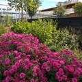 Flower gardens bring some natural beauty to the city.- East River State Park