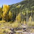 Fall foliage and fallen trees along Cascade Creek.- Cascade Creek Trail