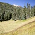Quiet meadows along Cascade Creek.- Cascade Creek Trail